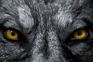 7-bloodcurdling-werewolf-tales-that-will-keep-you-up-at-night-390787[1]