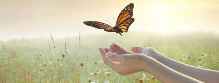 ButterflyLetGo